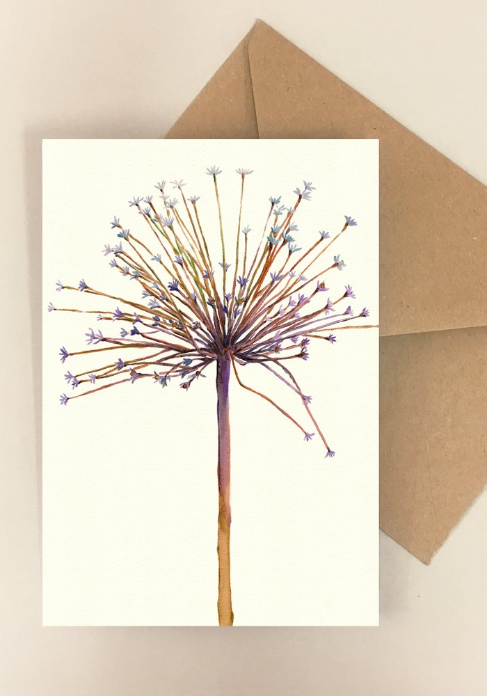Image of 5 Notecards - Folded - Schubertii No.1011