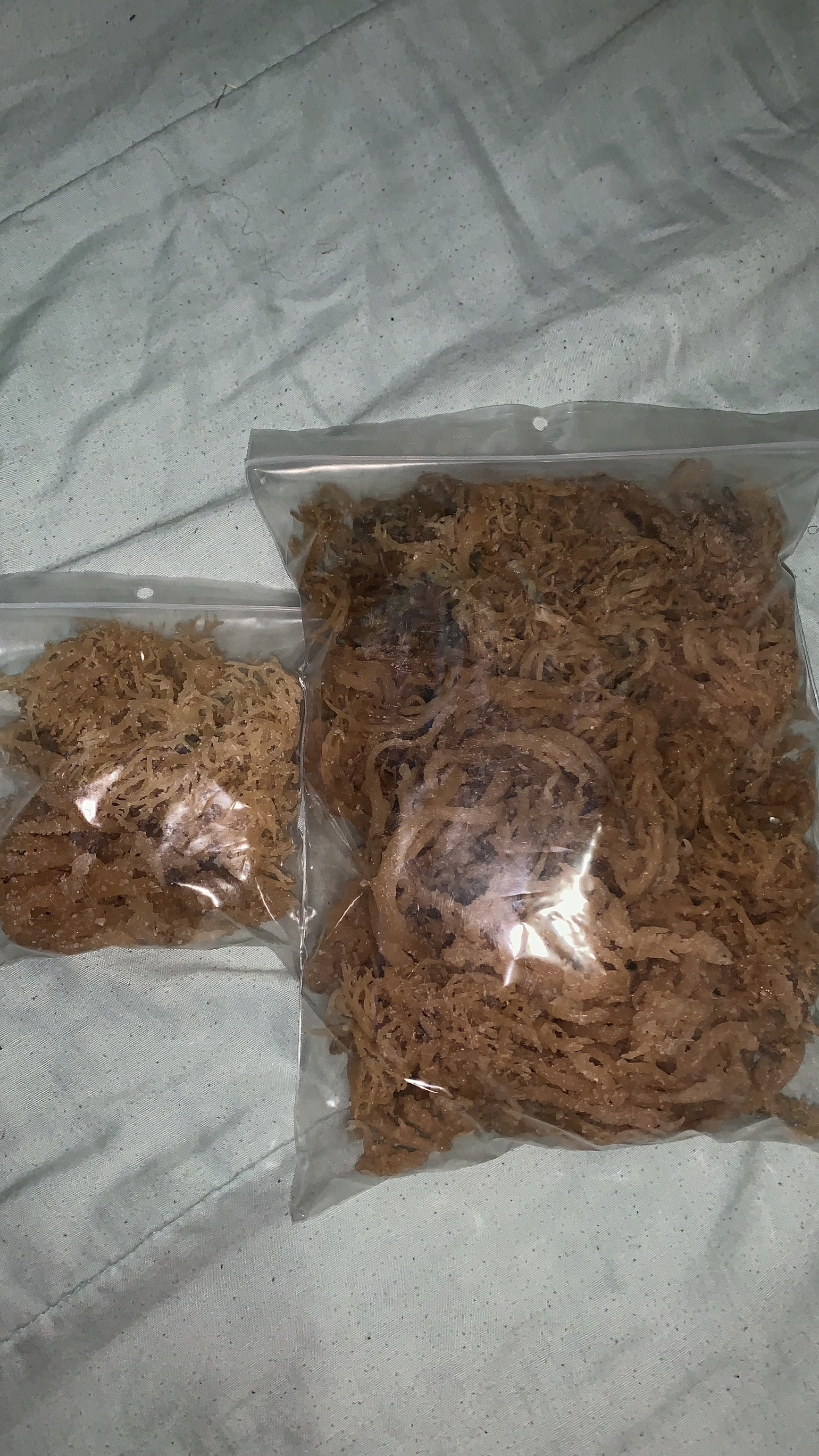 Image of Irish Sea Moss