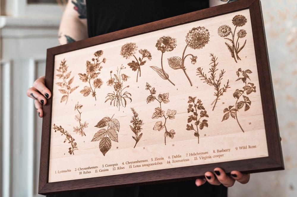 Image of Herbs II