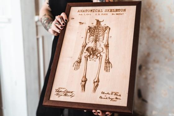 Image of Anatomic Skelleton
