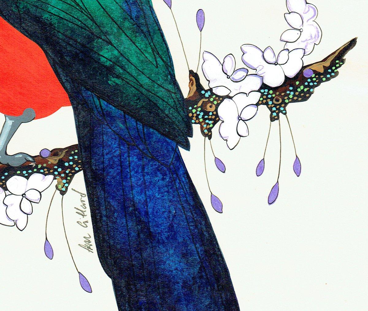 Image of Australian King Parrot