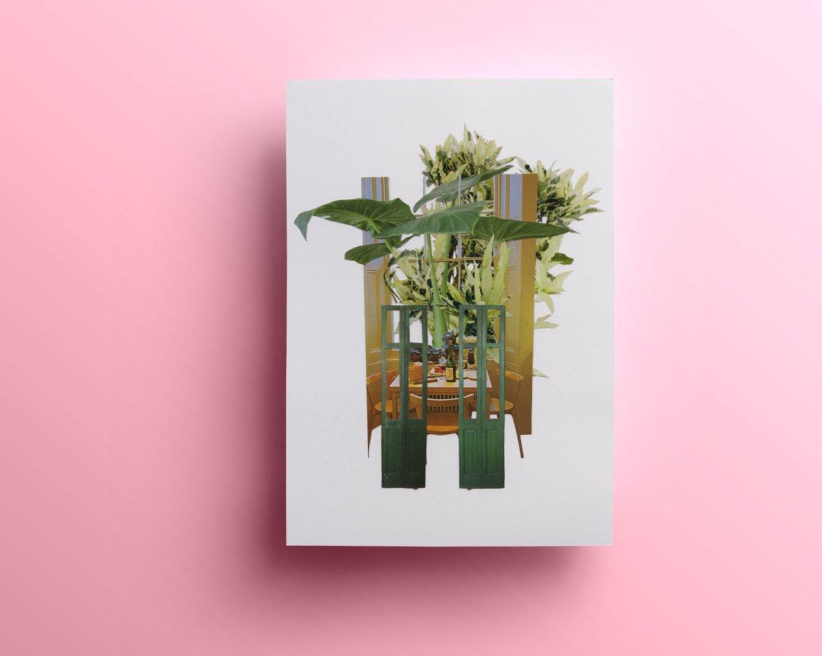 Peek (limited edition print)