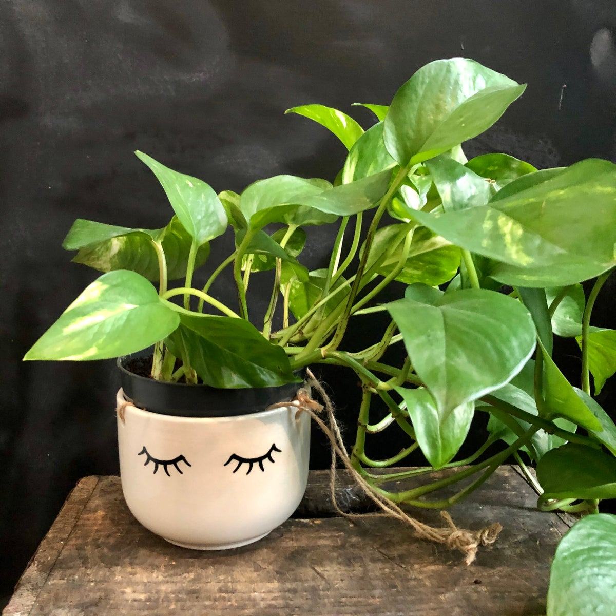 Cute eyes shut hanging plant pot