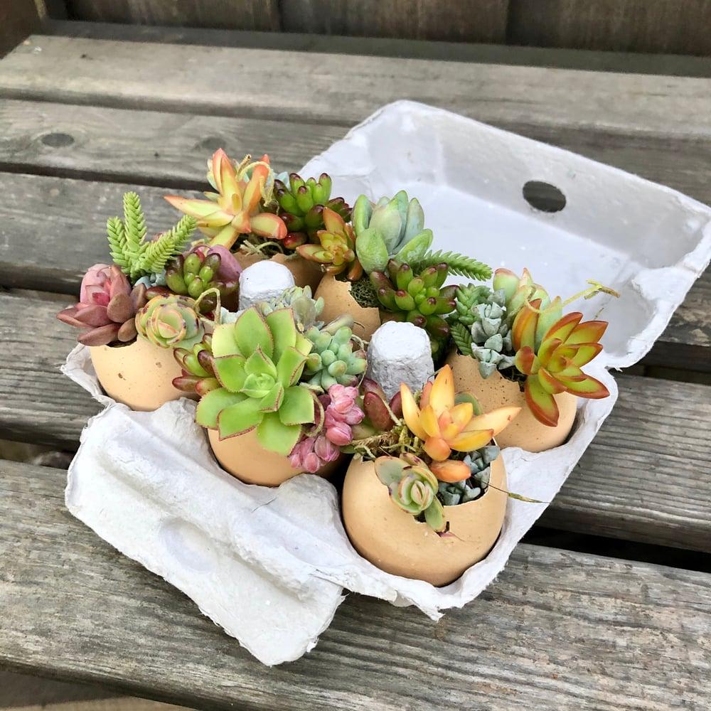 Image of DIY Stuffed Succulent Egg Kit