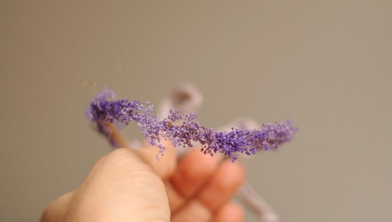 Image of Shades of lavender ( halo)