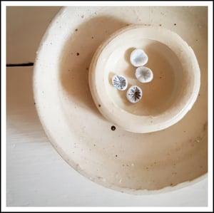 Image of Porcelain Studs - Limpets