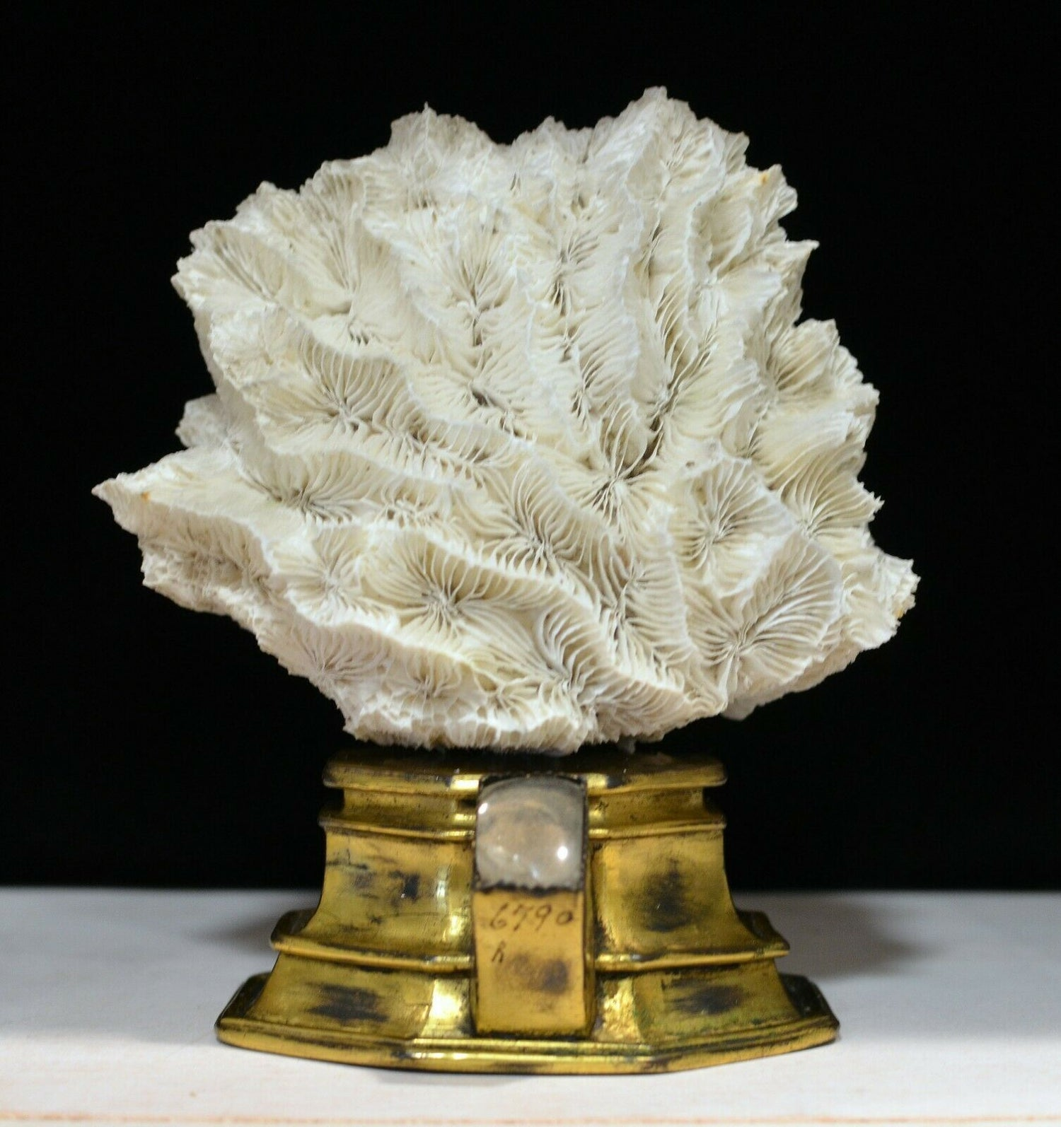 Image of 16th century gilt reliquary base with modern white coral