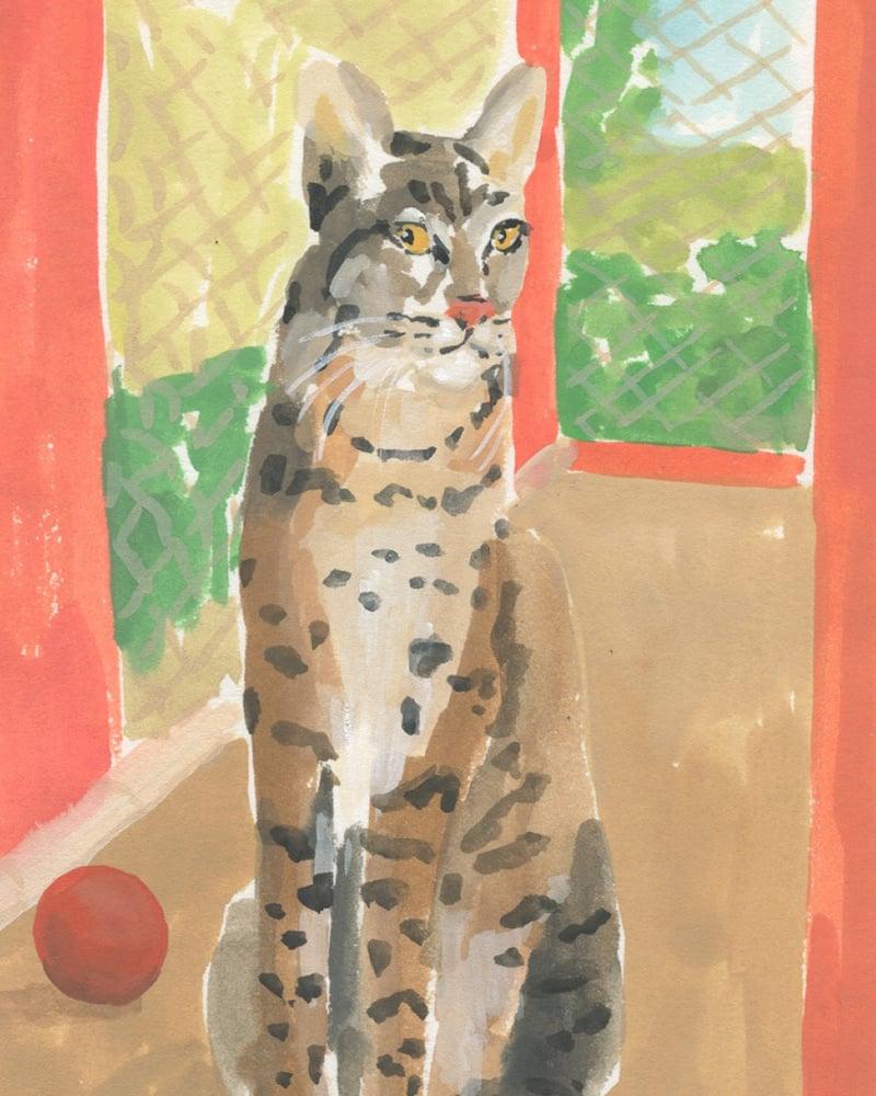 Image of Bobcat - Catlady + OKC Benefit