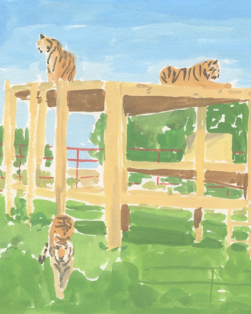 Image of Tigers - Catlady + OKC Benefit