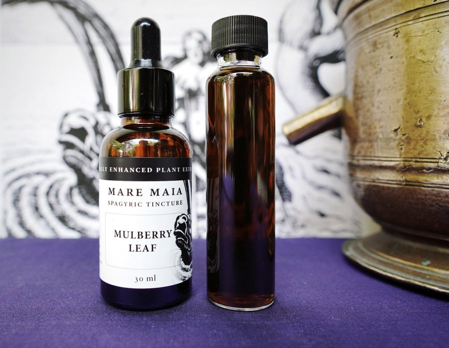 Image of MULBERRY LEAF spagyric tincture - alchemically enhanced plant extraction