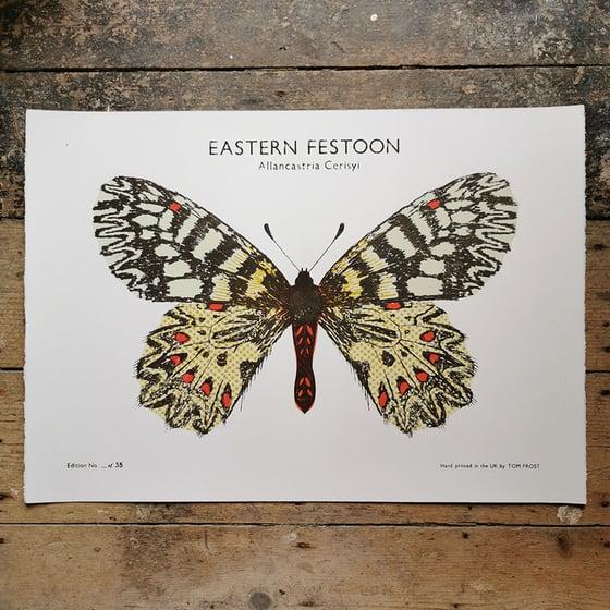 Image of Eastern Festoon