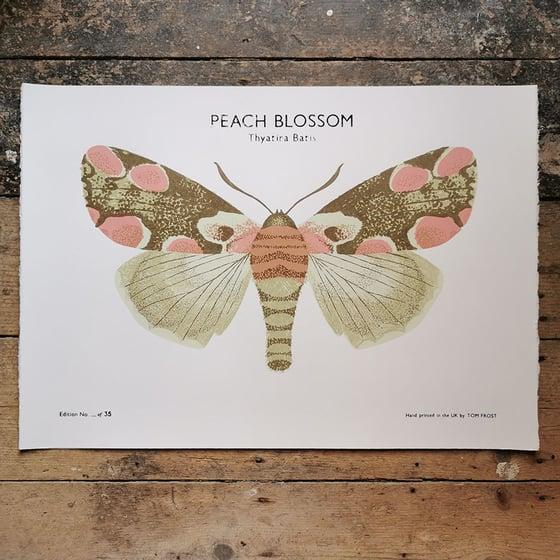 Image of Peach Blossom Moth