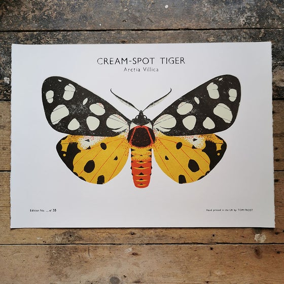 Image of Cream-Spot Tiger Moth