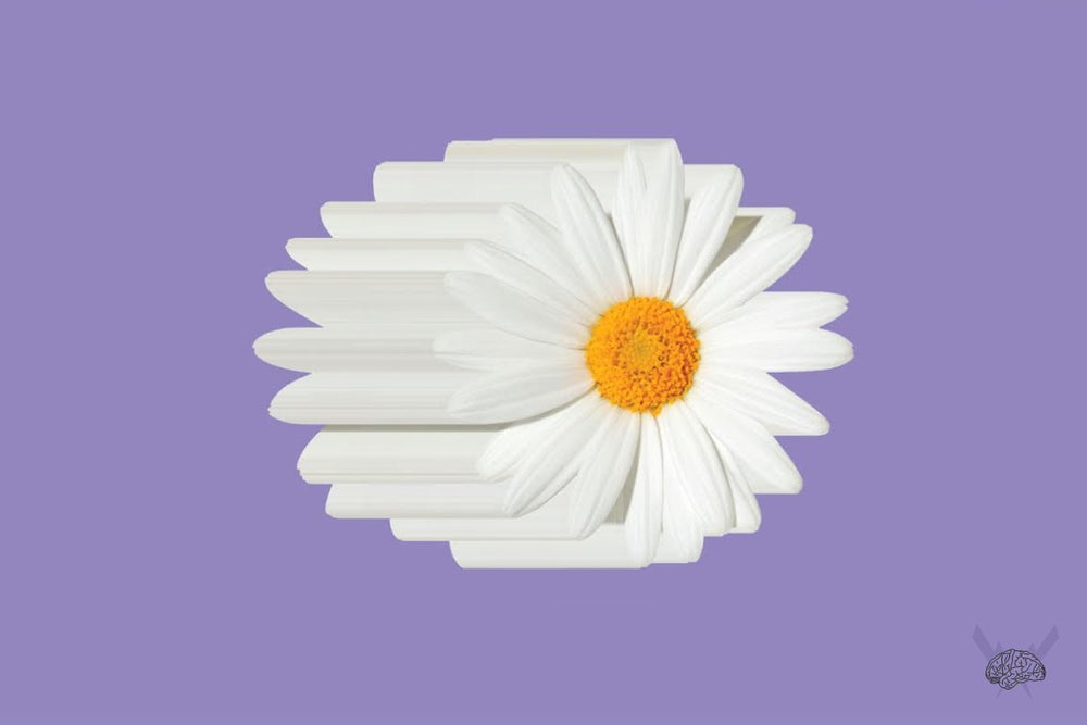"""Image of Daisy """"Violet"""""""