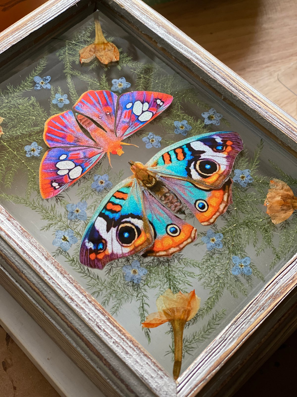 Image of Framed Resin Curio - Butterfly