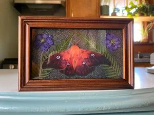 Image of Framed Resin Curio - Moth and Larkspur