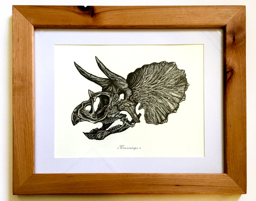 Image of Triceratops Skull in a Ravenwood Frame