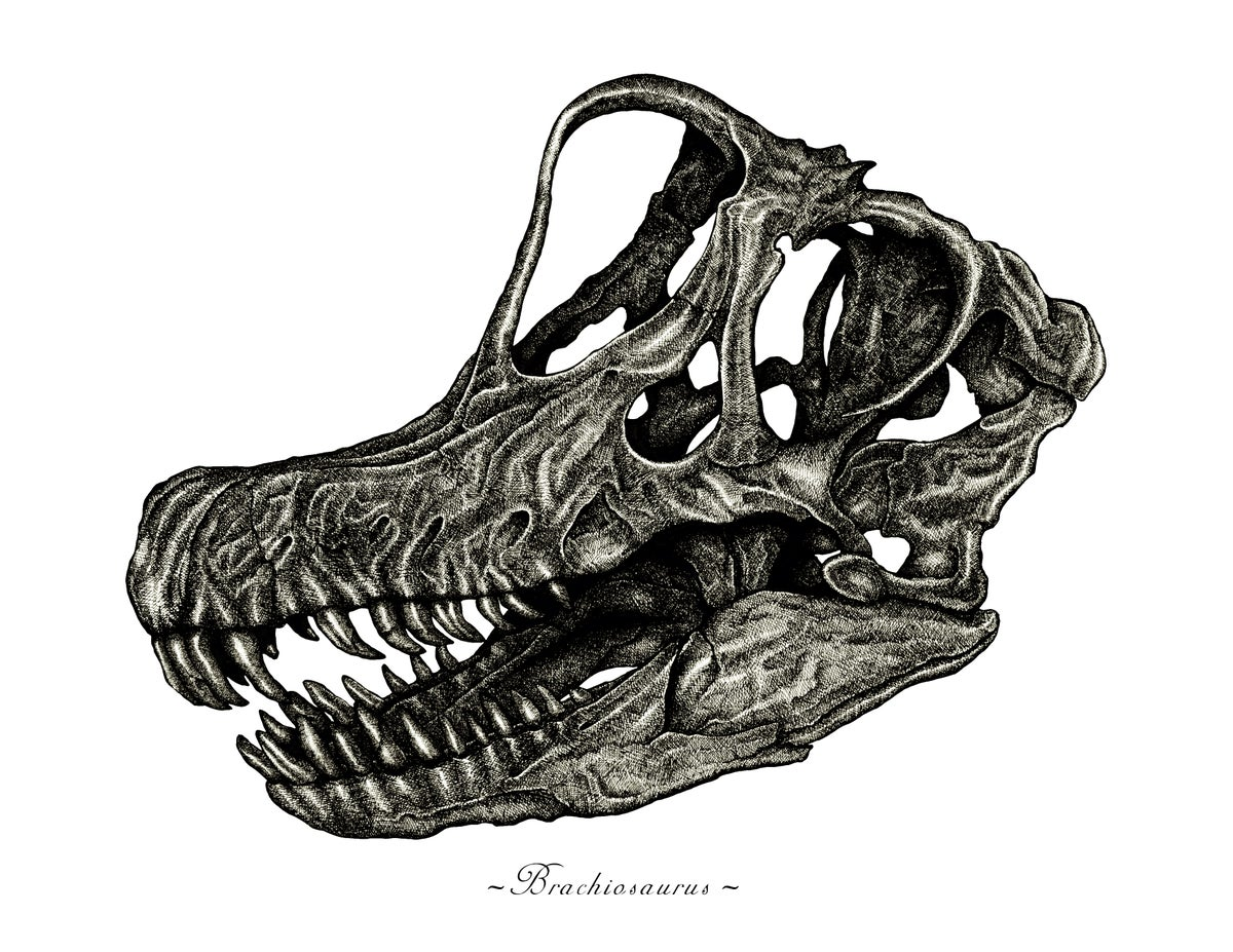 Image of Brachiosaurus Skull in a Ravenwood Frame