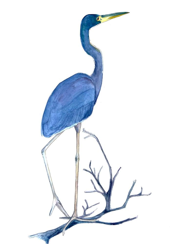 Image of HeronatNaplesaudubon