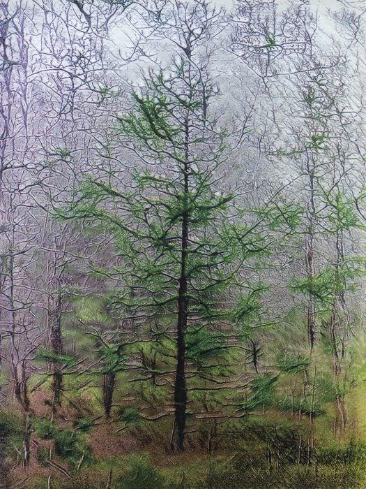 Image of Winter Forest by Skomakerdiket