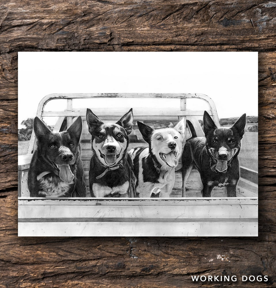Image of Working Dogs Greeting Card