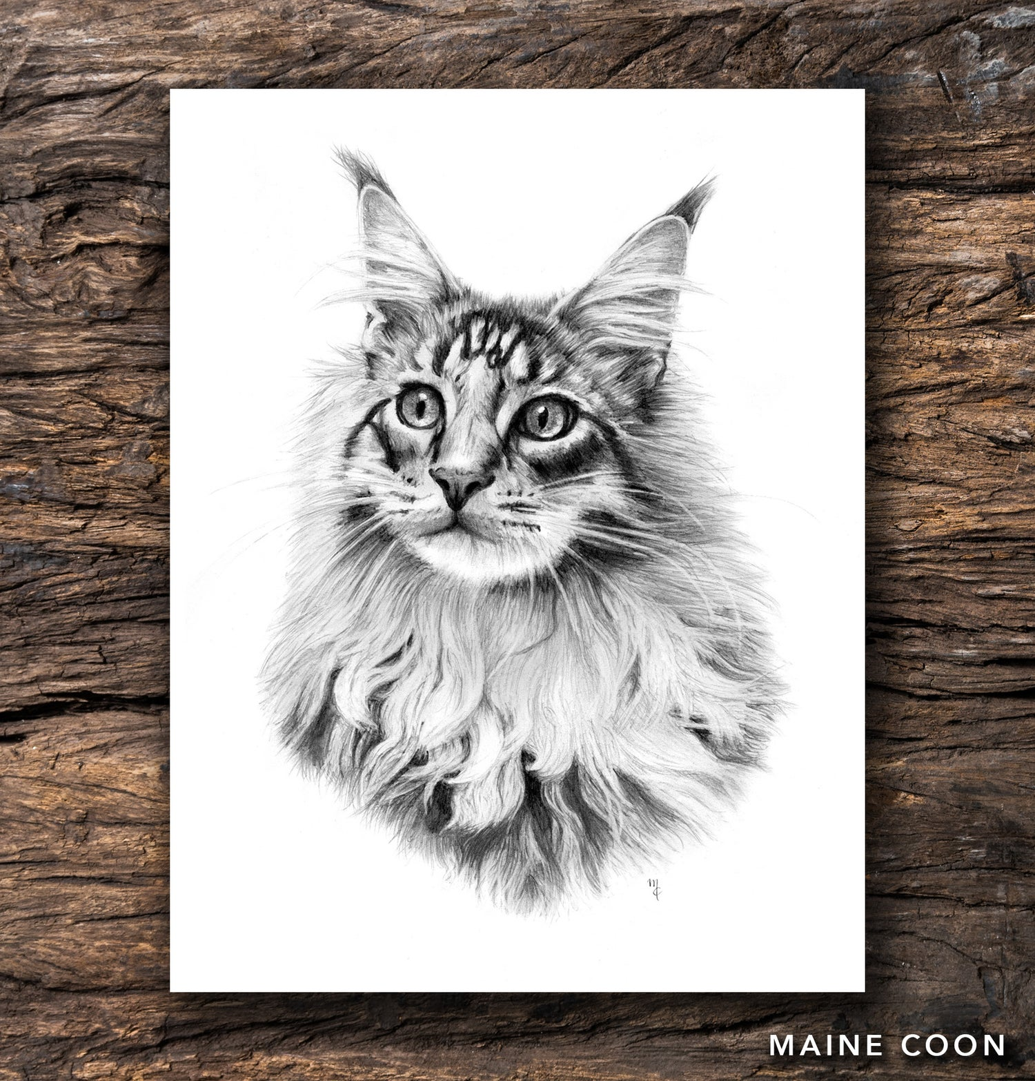 Image of Maine Coon Greeting Card