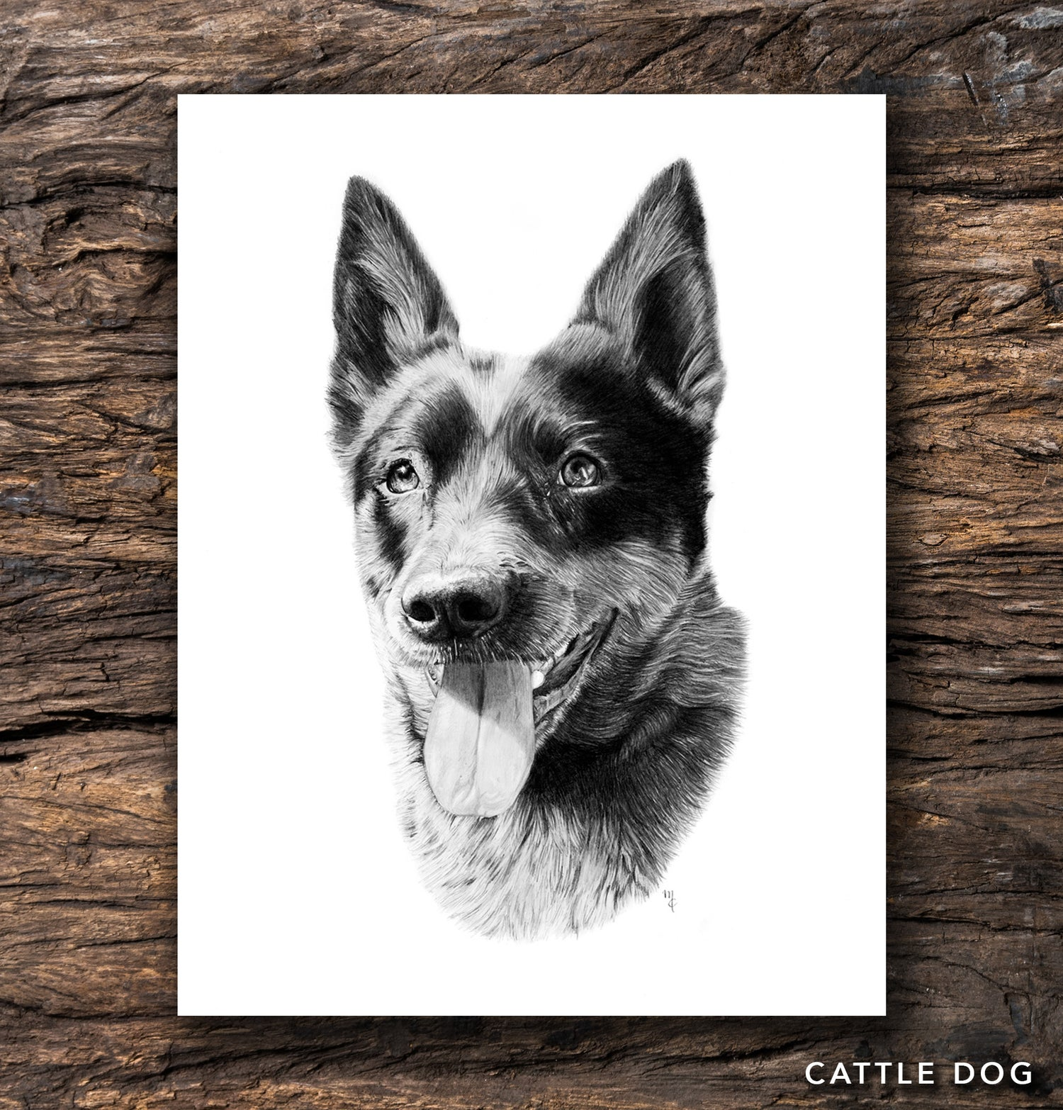 Image of Cattle Dog Greeting Card