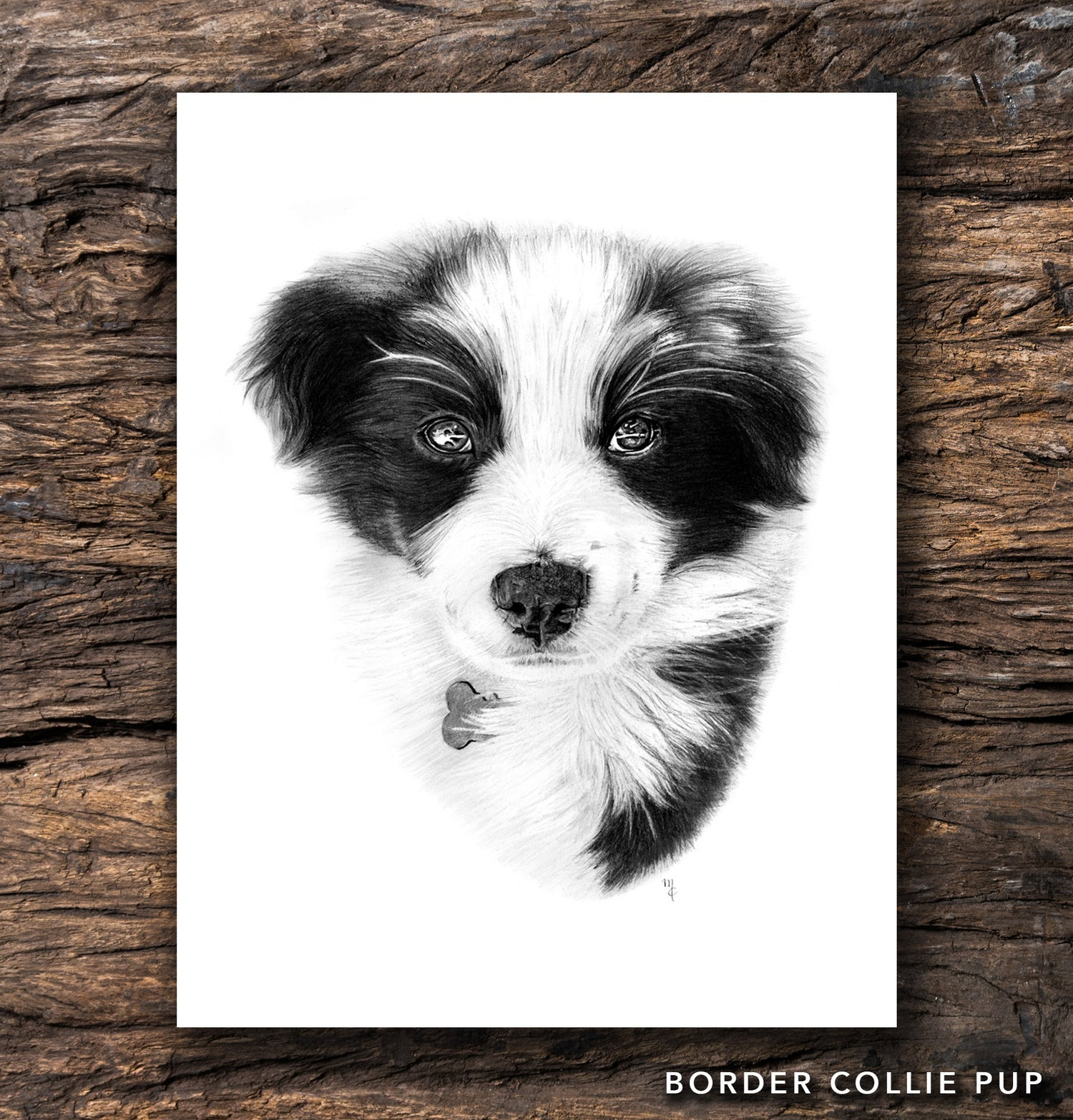Image of Border Collie Pup Greeting Card