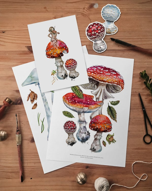 Image of The AMANITA pack