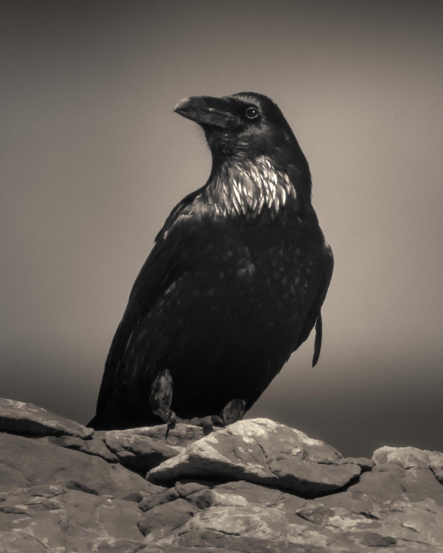 Image of Raven Spirit