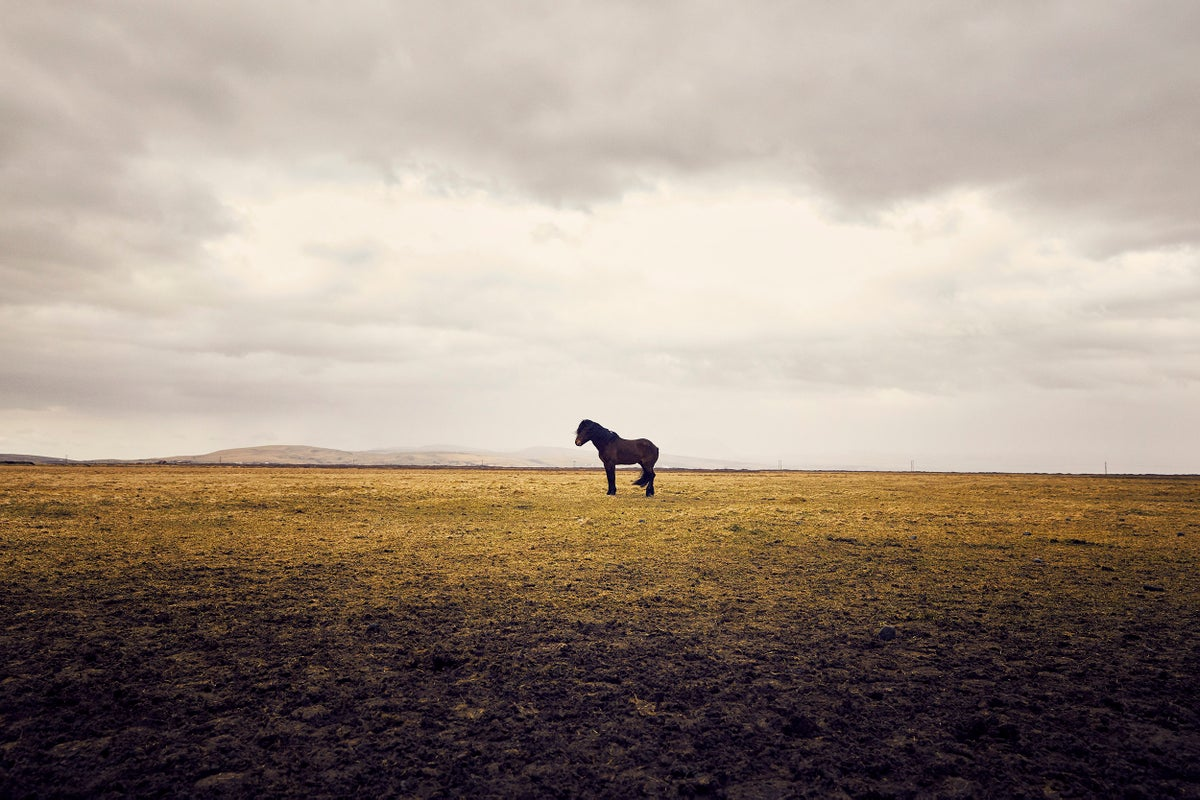 Iceland Horse 2, prints to benefit The Able Baker, Maplewood, NJ