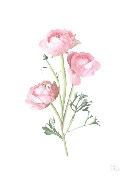 Image of Ranunculus Print