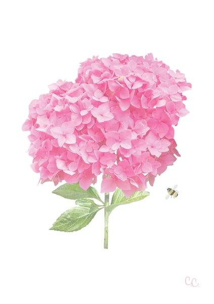 Image of Raspberry Pink Hydrangea Print