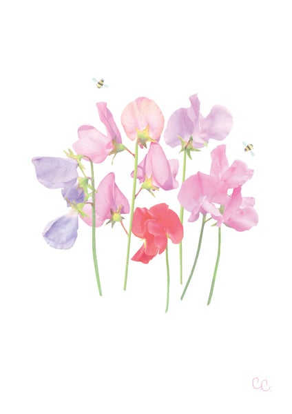Image of Sweetpeas Print