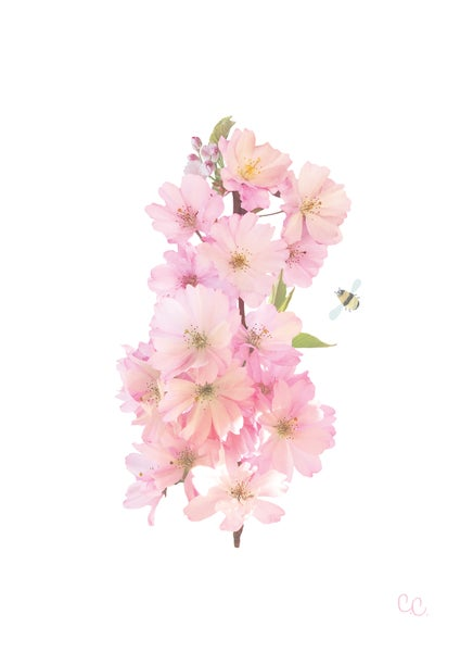 Image of Pink Blossom Print