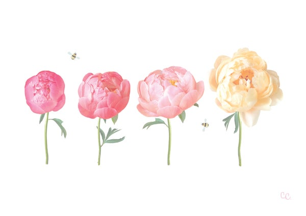 Image of Peony Blooms Print