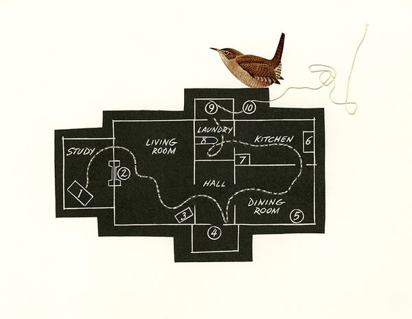 Image of Building plans of the typical house wren. Limited edition collage print.