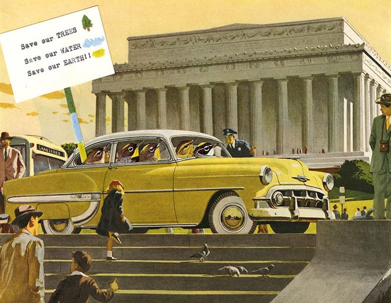 Image of Warblers in Washington. Limited edition collage print.