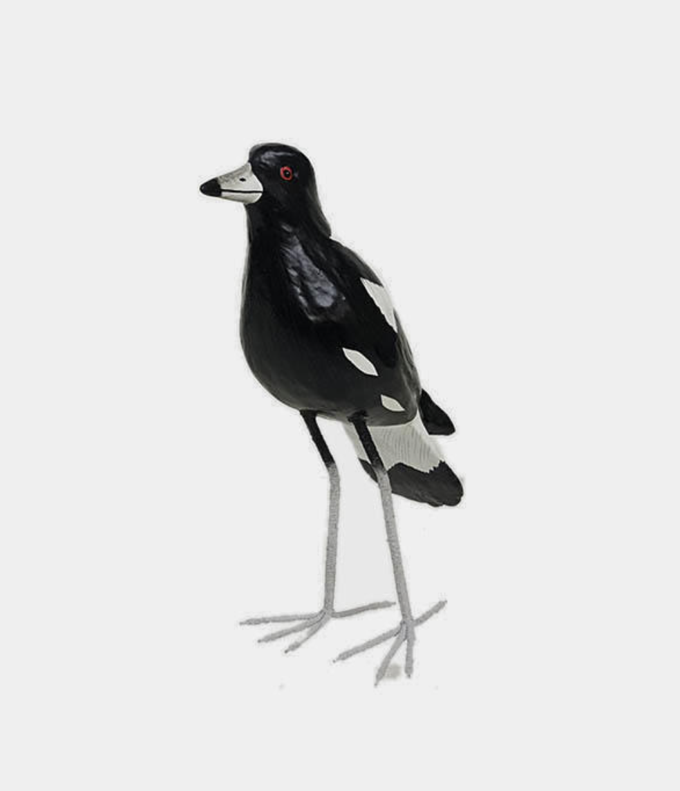 Image of Timber Magpie