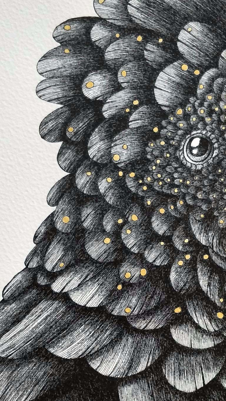 Image of Red Tailed Black Cockatoo