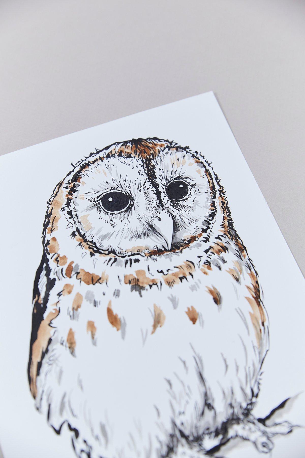 British Birds – Tawny Owl