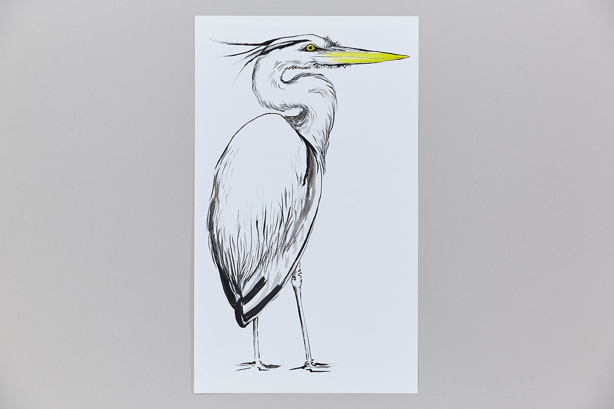 British Birds – Heron