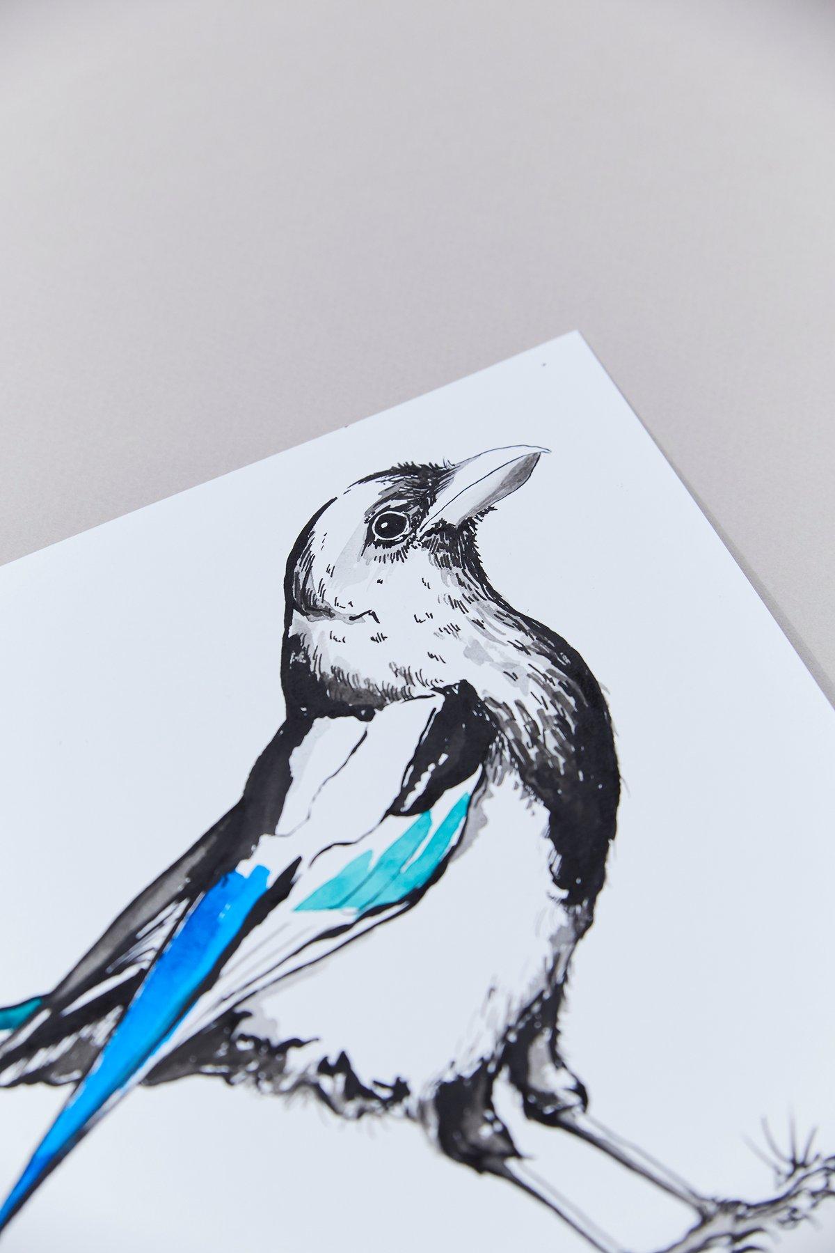 British Birds – Magpie