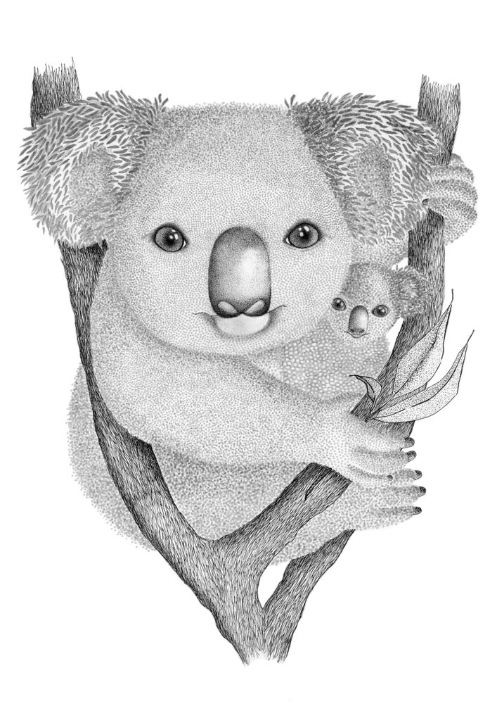 Image of Koala and baby Joey