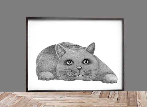 Image of British Shorthair