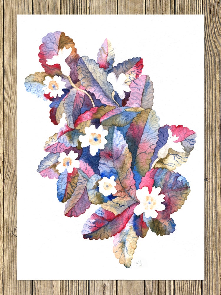Image of 'The Sweet Primroses'