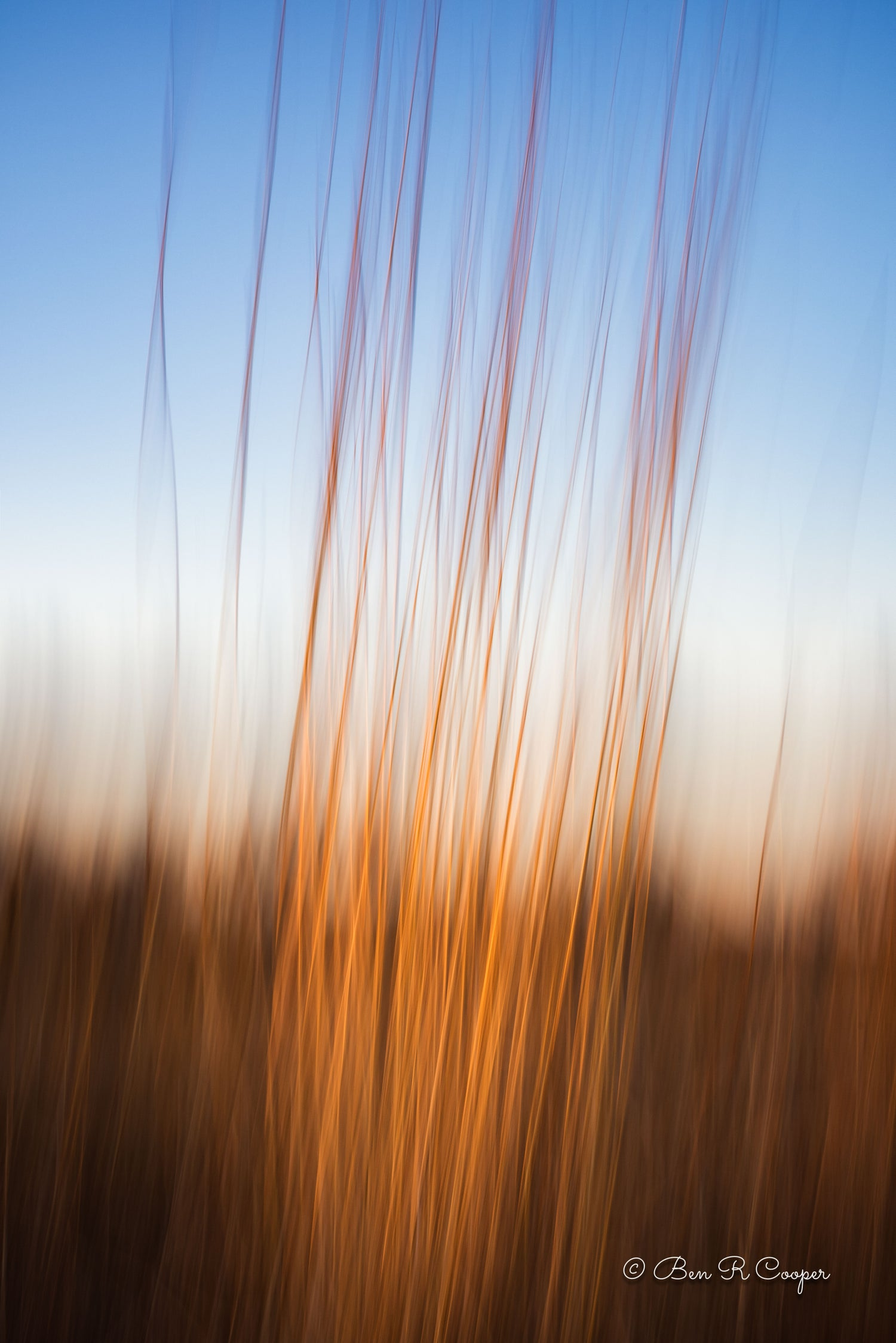 Abstract Native Grasses in Rice Creek