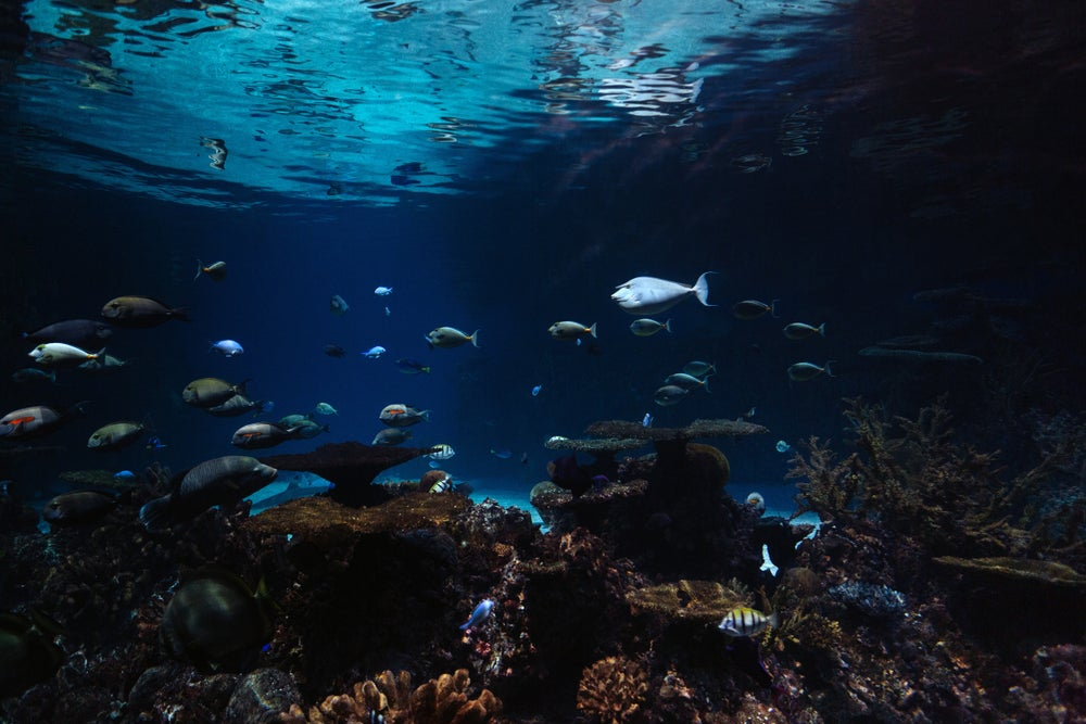 Image of Under the Sea