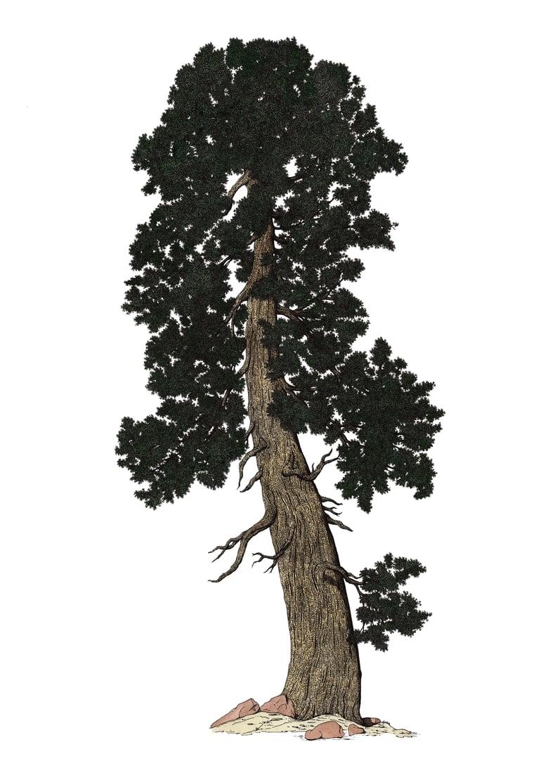 Image of nouveau redwood