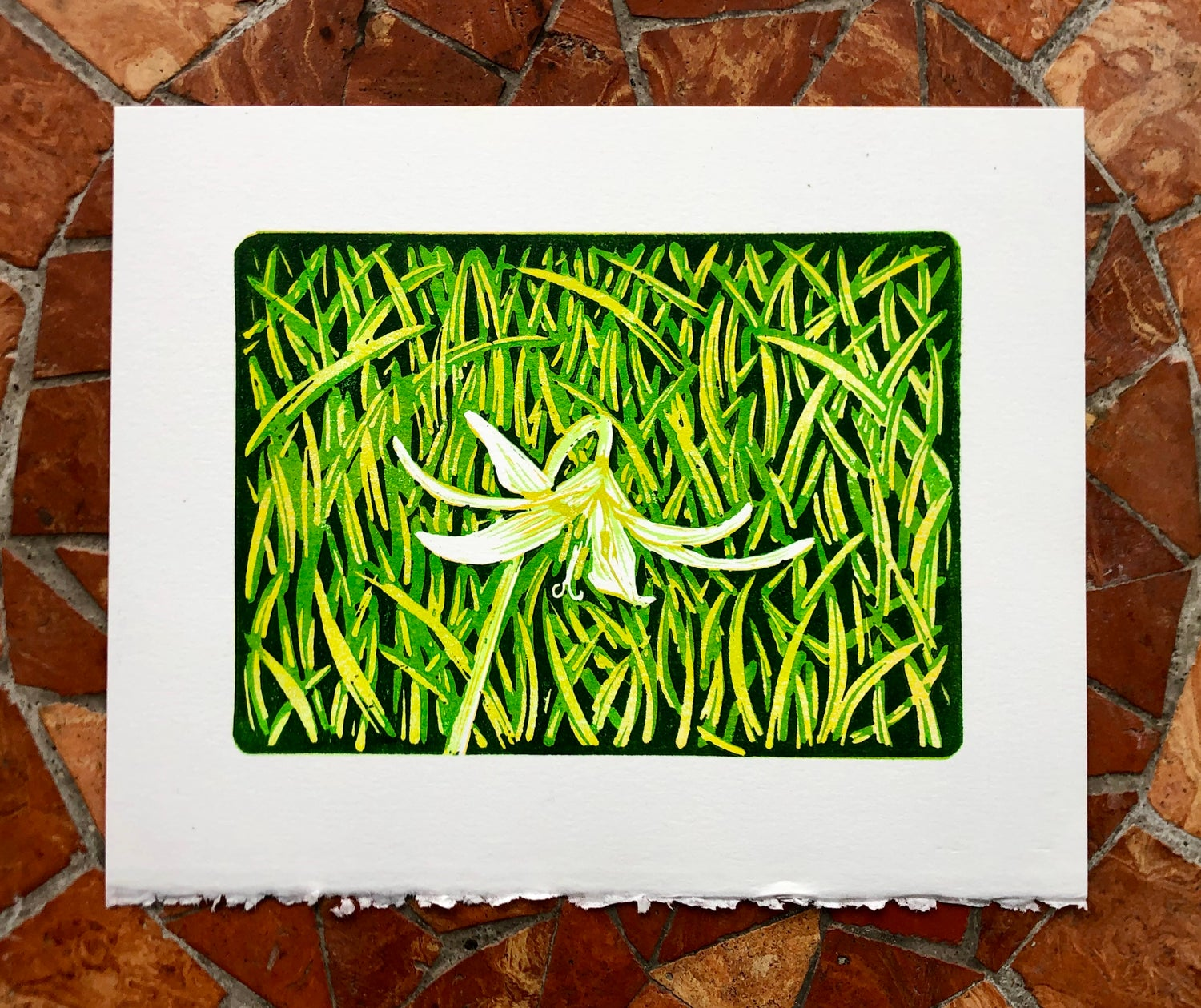 Image of Trout Lily print
